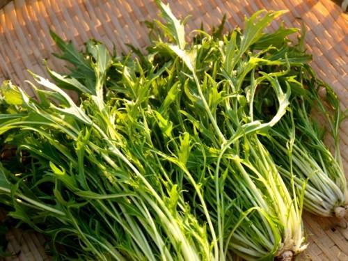 130115水菜レシピン1